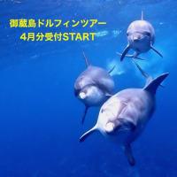 御蔵島ドルフィンスイムツアー 4月分 受付START