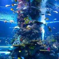 水の中の風景、魚たちといっしょに時間の経つのを忘れて泳いでみたい!!