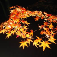 ■【カシャリ! ひとり旅】 京都の紹介 宝厳院 知る人ぞ知る「獅子吼の庭」をご紹介