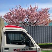 『♪梅は咲いたか♪』