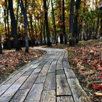 中札内美術村&六花の森  2021年4月29日オープン