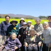 菜の花畑&グーローバル桜花再来