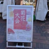菊花大会 神奈川県鎌倉市 日比谷花壇大船フラワーセンター(3)三本立、七本立