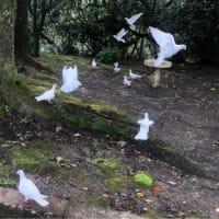 鳩は逃げる