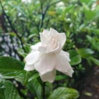 フラレッスン♪梅雨真っ盛り。出逢いと別れの新学期