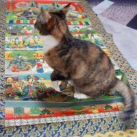 愛猫も昭和20年代の雛軸が好きなんです♪