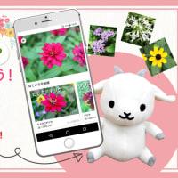 Twitterに「#コノハナナニ」をつけて投稿!「コノハナナニで花の名前を調べよう」キャンペーン🌸🐐