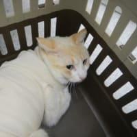 野良ネコさんに里親さんが決まりました。