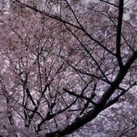 【日】桜だけじゃない