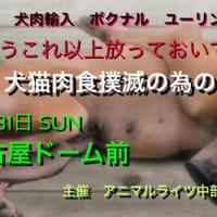 【参加者募集中】年末年始の啓発アクションのお誘い☆彡 #GoVegan #イルカ猟 #犬肉食