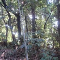 愛宕山神社の情景