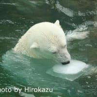 みゆきちゃんに氷のプレゼント♪(7月14日)
