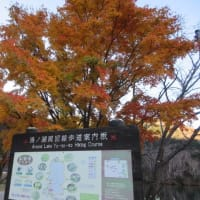 奥日光の紅葉