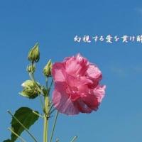 『 薔薇一輪一瞬一生忍恋 』瘋癲老仁妄句zqt0706