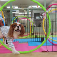未病ケアの《Dogscan》開催しました!【ALOHA塾】  犬のしつけ教室@アロハドギー