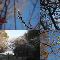 花のある風景@2020/02/11 。。。