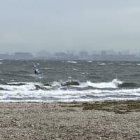 検見川浜の風結果 天気が悪いからか心臓の調子が今一 東京都で新たに224人が新型コロナに感染