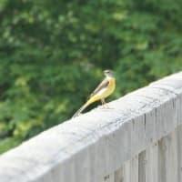 フォト旅日記zqt2003トピック『 03鳥 04鳥 』
