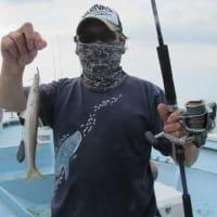 9/25(土)本日もカマス絶好調^^アオリイカにサゴシにアコウにマイカと五目釣りでした(*゚▽゚)ノ