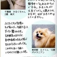 新発売★ワンちゃん専用の玄米酵素「すっきりだワン」!~ブログNo483