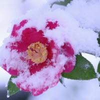 たのしい万葉集 妹が家に雪かも降ると見るまでに・・・
