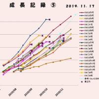 不定期成長記録、屋内越冬組2016~2019孵化仔