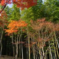 紅葉の京都の帰りには、【鉄板焼き】京とんちん亭に行きます。