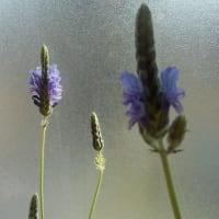 お花の蕾から少しずつ、少しずつ、少しずつ……♪(3)