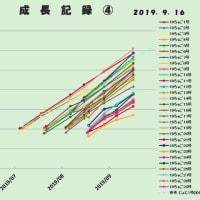 不定期成長記録~~2019年9月16日・マルギ2019孵化仔
