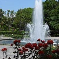 須磨離宮公園 バラ '21 春