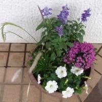 7/22 Myガーデンの寄せ植え鉢など