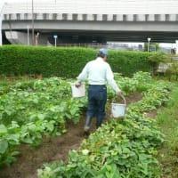 8月14日 農園作業日