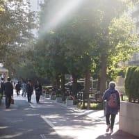 2020年10月8日(木)告示10月25日(日)投票で、広島選挙区で補欠選挙が行われる公算が高まる 河井案里自民党参議院議員の百日裁判