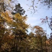 令和2年度 森林探訪