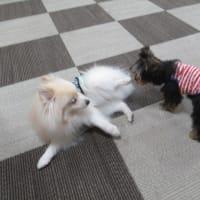 20/03/31 犬の幼稚園BuddyDog