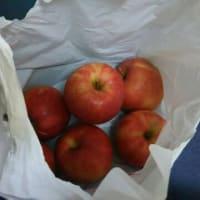 美味しい長野のリンゴ園のリンゴ・・・友人から頂きました。昨年は水害被害で営業無し・・・2年ぶりです。