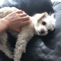犬の写真がやはり撮れない