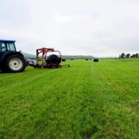 牧草畑と弁当