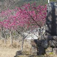 紀勢本線全通60周年キネン乗り継ぎ(その3)