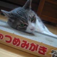 DVDひとこと感想(その3)