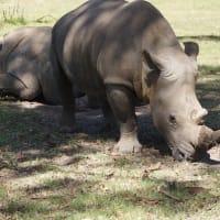 南アフリカに行ってきました(5)終の棲家
