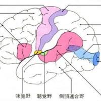 頭を触るだけで何故症状が軽減したりするのでしょうか