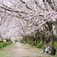 ソメイヨシノ開花状況:3月28日