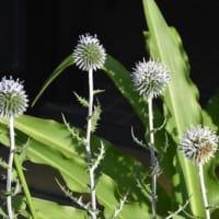庭の花 (No 2390)
