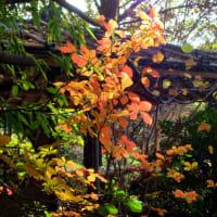 紅葉の季節の一時です