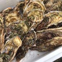 本日、岩手県産の牡蠣が入荷致しました!!小田原早川漁村 漁師の浜焼 あぶりや