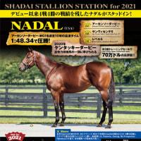 【ナダル(Nadal)】が「社台スタリオンステーション」に到着!