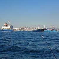 アカメ(ヒガンフグ)狙いの湾フグ釣り(2019年11月16日)