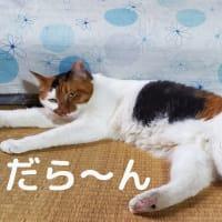 【139】れいにゃん堂のれいちゃん・だら~ん&商品紹介😸