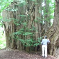 白神山地の樹木